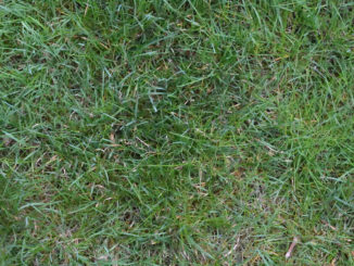 Schau mir in die Grasnarbe, Kleines... Blick von oben auf einen Rasen.