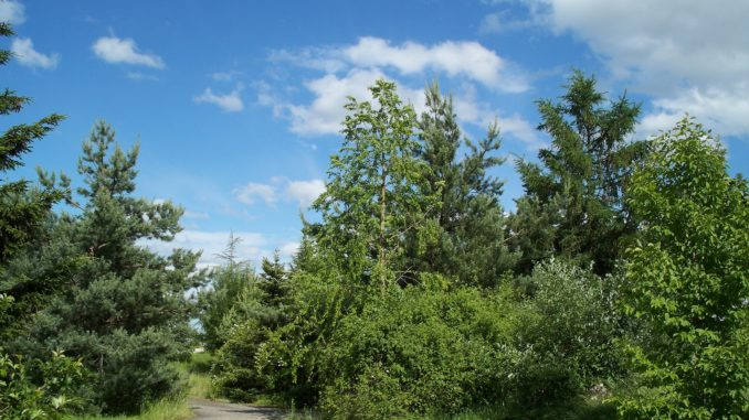 Ein Wald wie im Bilderbuch - Sommer, Sonne, Bäume !