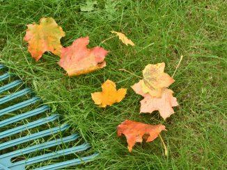 Rasenpflege im Herbst - was am Ende des Gartenjahres noch zu tun ist.
