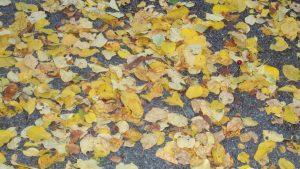 Alles, was vom Herbst übrig bleibt: Viele Blätter auf dem Boden.