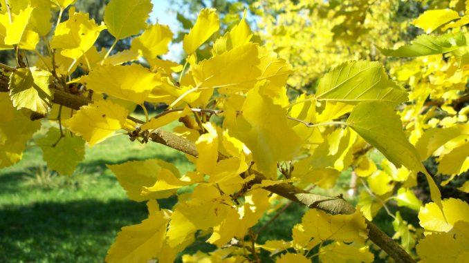 Das bunte Farbenspiel der Natur verrät uns: Der Herbst ist da !