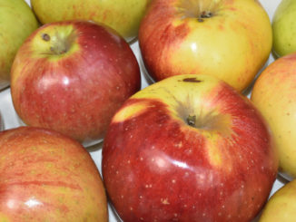 Auch wenn Äpfel aus dem eigenen Garten selten perfekt aussehen - gesund sind sie in jedem Fall !