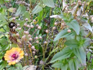 Die letzten Blüten des Jahres - im Herbst ist es an der Zeit, im Garten aufzuräumen!