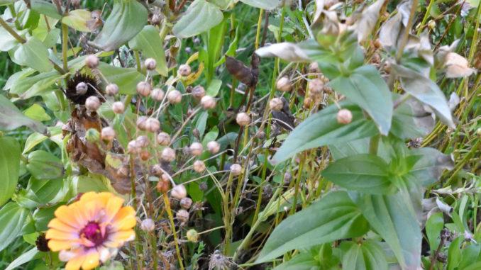 Die letzten Blüten des Jahres - im Herbst ist es an der Zeit, im Garten aufzuräumen !