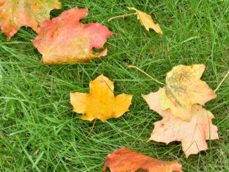 Meistens bleibt es im Herbst nicht nur bei ein paar Blättern - Laub kann ziemlich viel Arbeit machen!