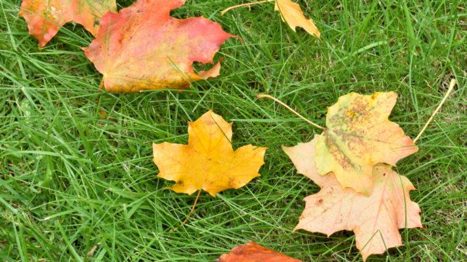 Meistens bleibt es im Herbst nicht nur bei ein paar Blättern - Laub kann ziemlich viel Arbeit machen !