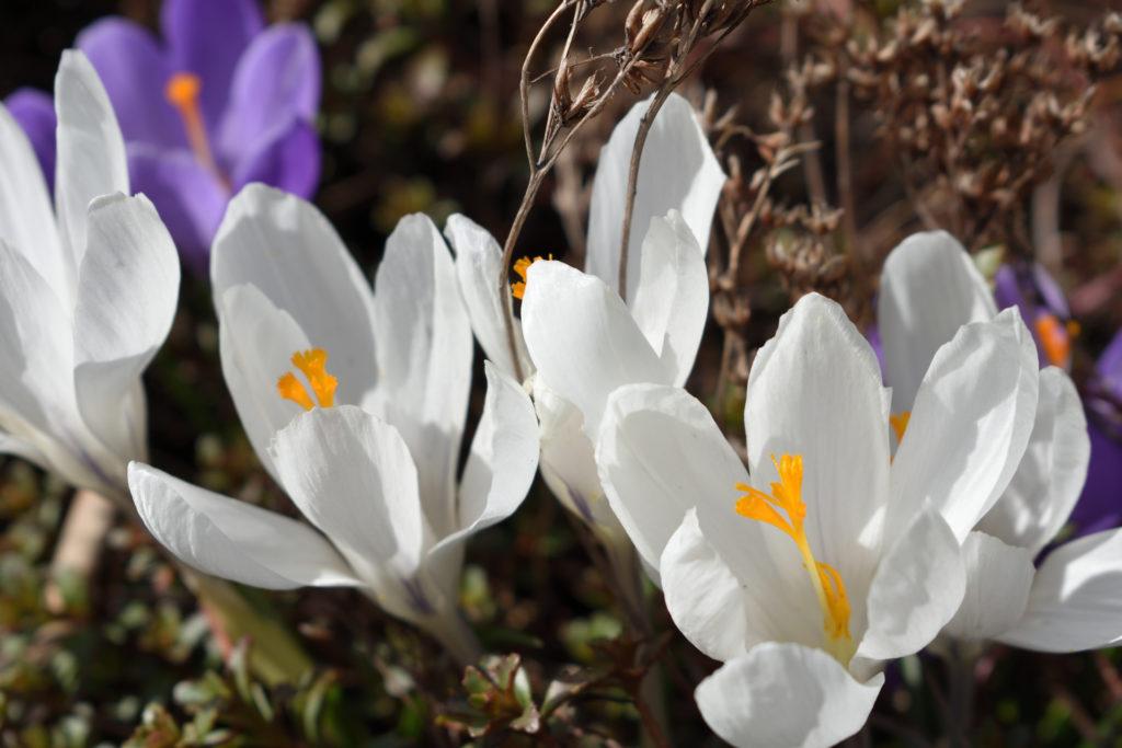 Der Frühling ist da! (Bildergalerie 4/10)