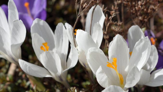 Die Sonne scheint und die Natur erwacht zu neuem Leben! Na, auch schon Frühlingsgefühle?