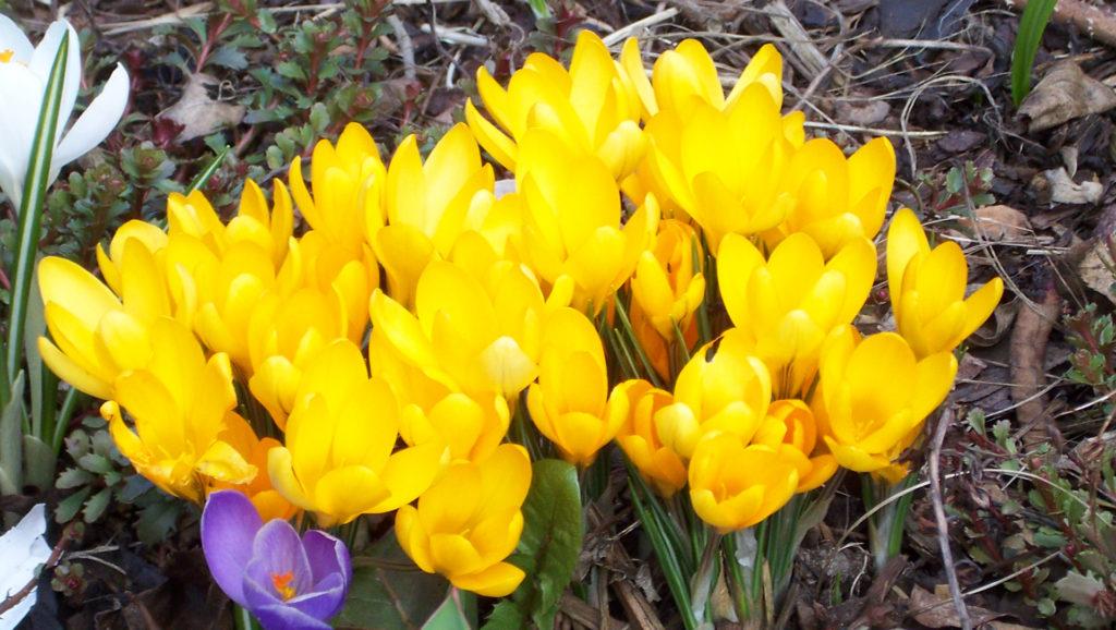 Der Frühling ist da! (Bildergalerie 3/10)
