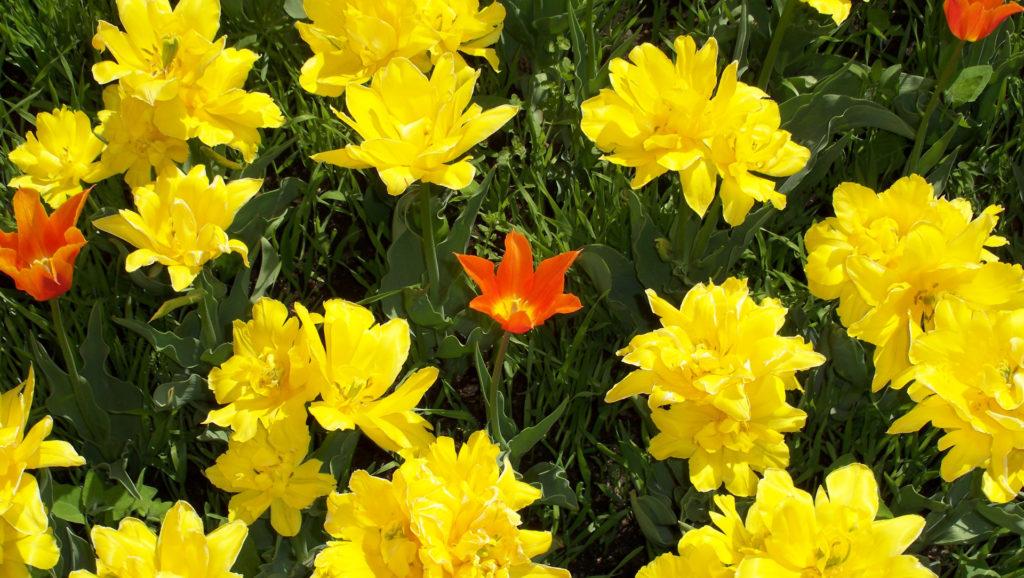 Der Frühling ist da! (Bildergalerie 6/10)