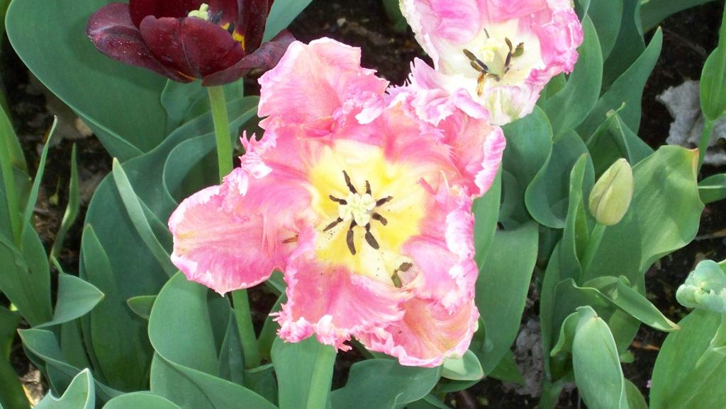 Der Frühling ist da! (Bildergalerie 8/10)