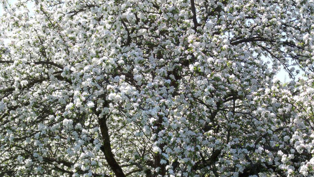 Der Frühling ist da! (Bildergalerie 10/10)