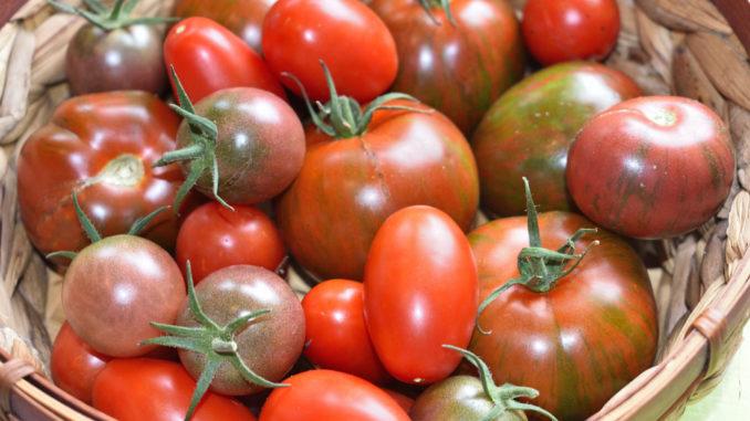 Die gibt's nicht nur in rot - Tomaten bieten eine unglaubliche Vielfalt in Form, Farbe und Geschmack.