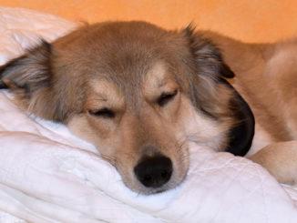 Oh oh, hoffentlich verschläft da jemand nicht den Jahreswechsel... ;-) Ob Filou von einem großen Feuerwerk träumt? Wer weiß - jedenfalls scheint er Silvester ganz entspannt zu genießen!