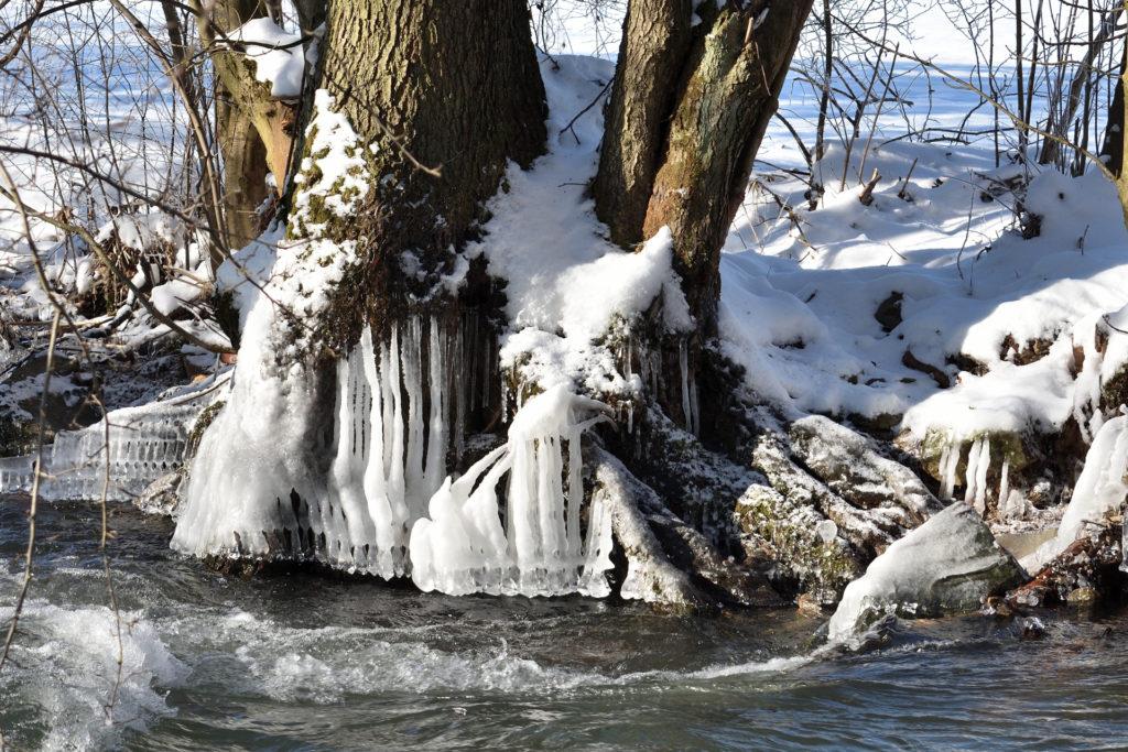 2021 - Der Winter in Bildern! (Bildergalerie 3/14)