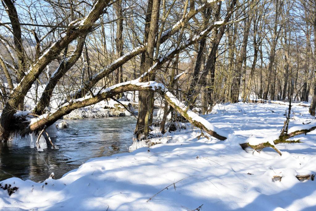 2021 - Der Winter in Bildern! (Bildergalerie 9/14)