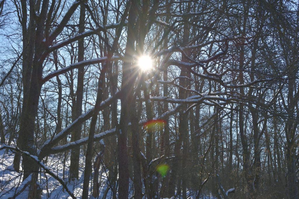 2021 - Der Winter in Bildern! (Bildergalerie 12/14)